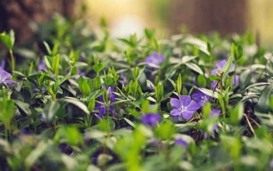 цветы, summer, природа Фон № 84493 разрешение 2560x1600
