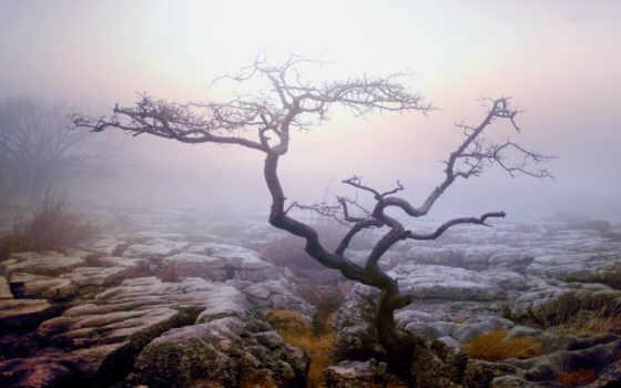 дерево, одинокое, туман