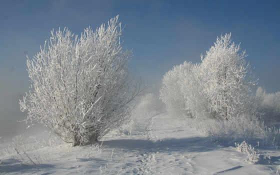 winter, trees, снег, кусты, природа, among, деревьев, trail, животных, зимних, закат,