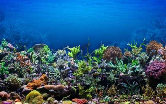 coral, объекты, copyright, риф, tatyanayat, free, аквариум,
