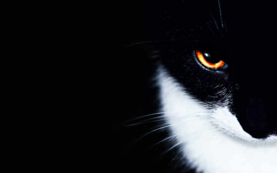 black, кот, эндшпиль, miyaga, white, utonut, адрес, доехать, bro, talyi, работать
