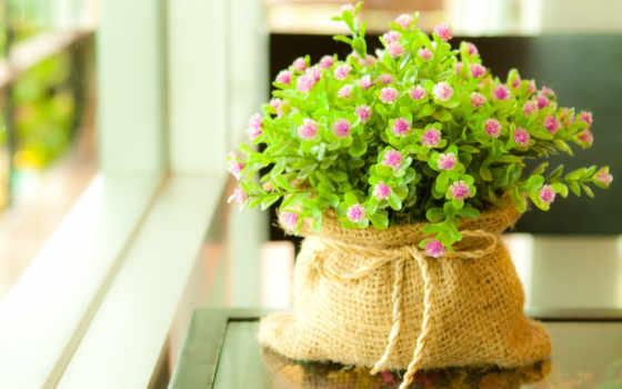 цветы, комнатные, растительность