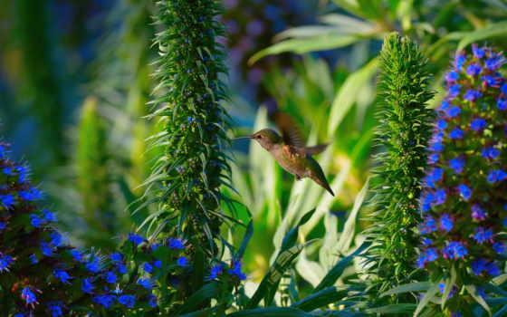 animals, колибри, цветы