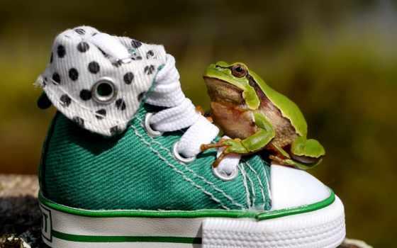 лягушка, лягушки, дождь, туфли, сидит, кеды, брызги, лист,