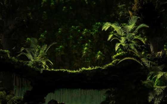 природа, jungle, лес, папоротник, water, красивые, landscape, tropics, зелёный,