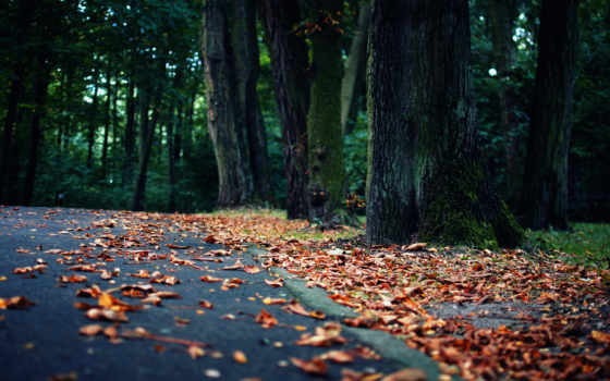 осень, качестве, хорошем, страница, природа, осени, possible, лирическое, trees, лес, смотреть,
