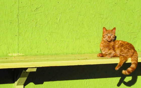 кот, ginger, sitting, скамейка, views, fone, desktop,