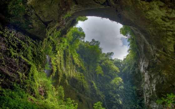 лес, природа, страница, горы, trees, browse, скалы, большие, березы, ущелье,