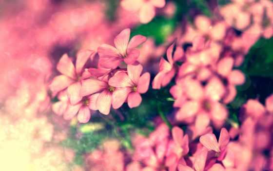 cvety, растения, макро, color, природа, яркие, розовые, обработка, розовый,