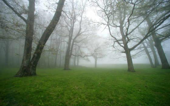 поляна, лесу, туманная, trees, лес, трава,