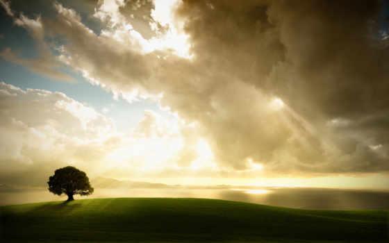 oblaka, sun, сквозь, красивые, небо, дерево,