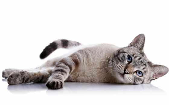 корм, кошек, eukanuba, интернет, stern, plan, dry, royal, кошки, canin,