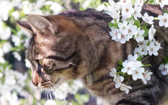 cvety, кошки, animal, весна, кошаки, zhivotnye, весной, butter, animals,