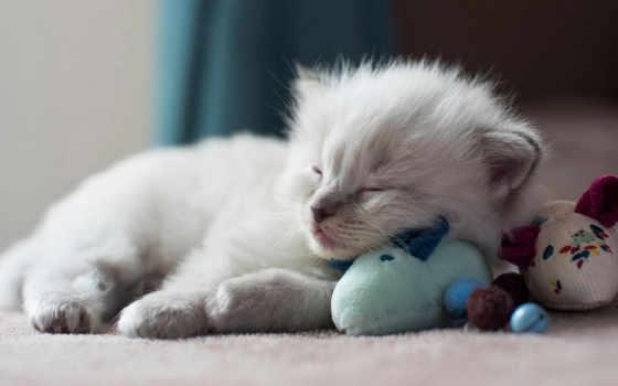 toy, кот, своими, котенок, рука, сделать, тигр