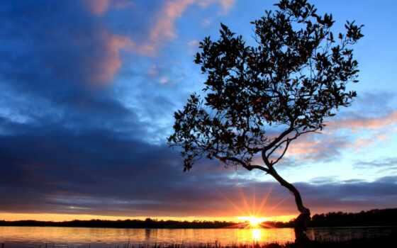 дерево, берег
