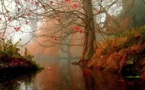 осень, water, дерево