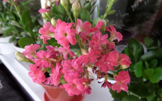 цветы Фон № 70978 разрешение 2560x1600