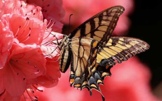 высоком, бабочка, разрешений