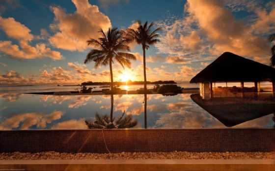 maldives, природа, пальмы