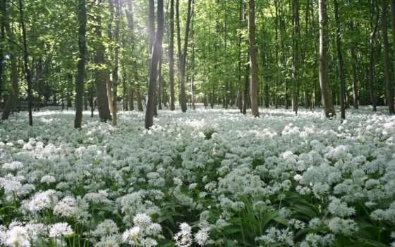 широкоформатные, весенние, весна, февр, информация, прочитать, цитата, свой, community, цитатник, целикомв,