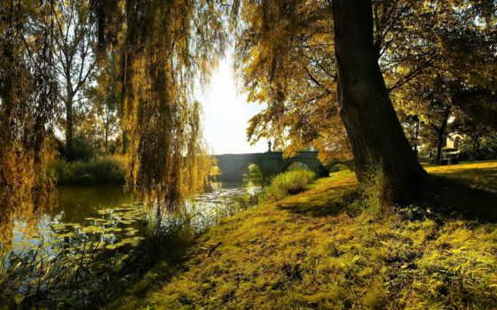 willow, со, водой, добавить, favourites, склонилась, просмотров,