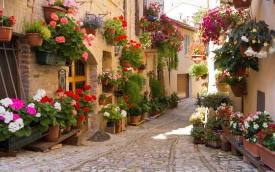 flowers, цветы, улица, вазон, greece, pots, природа, desktop,