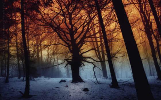 ecran, fonds, природа, forêt, arbres, fond, des, hiver,