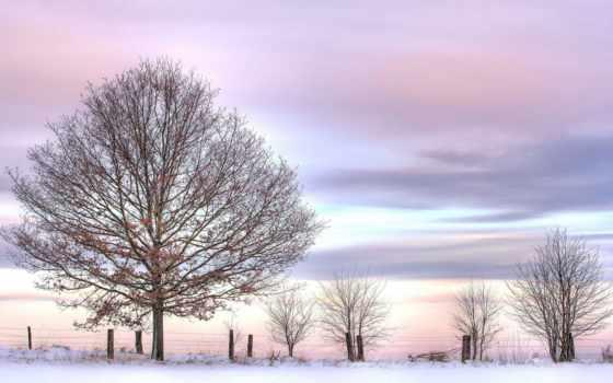 winter, небо, розовое, дерево, забор, снег,