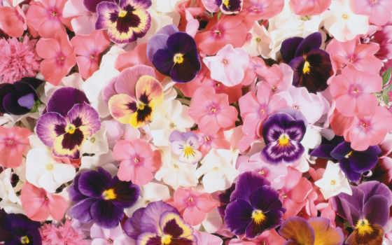 fond, ecran, fleurs