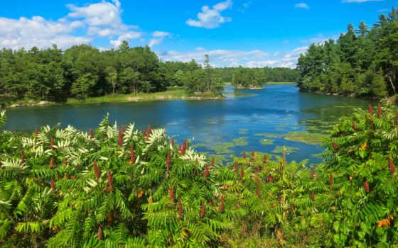 лес, lavender, scenery, islands, new, река, york, hdr, flowers,