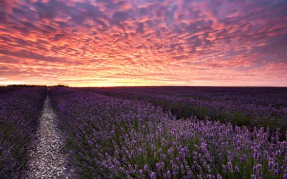lavender, поля, дороги, cvety, levendula, лаванды, virágmező,