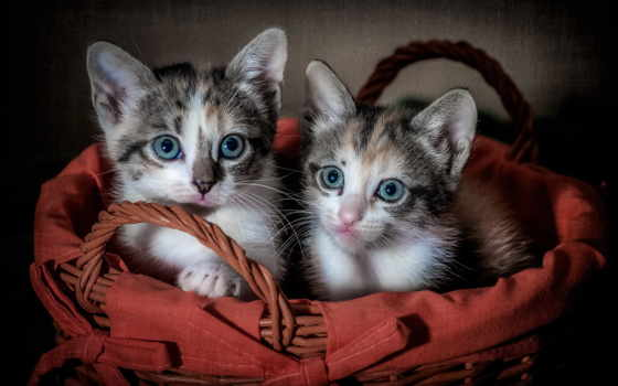 страница, красивые, два, сидят, котенка, fone, capa, счастья, cwer,