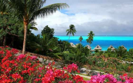 ocean, пальмы, tropical, бунгало, рай, cvety, природа, страница,