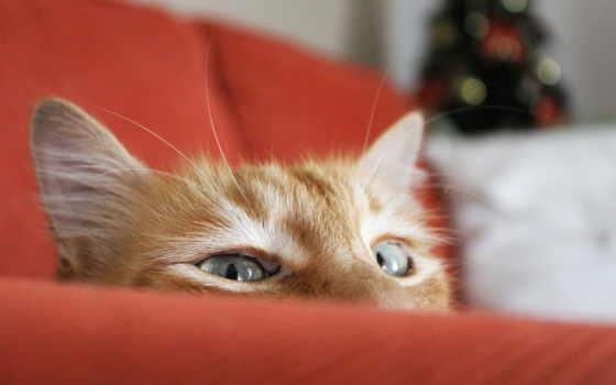 выглядывает, кот, red, за, елка, trick, диван, кошки, кота,
