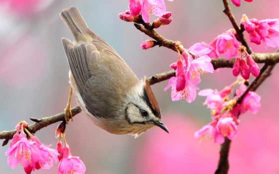 природа, года, когда, world, весна, природы, весны, awakening, пробуждения,
