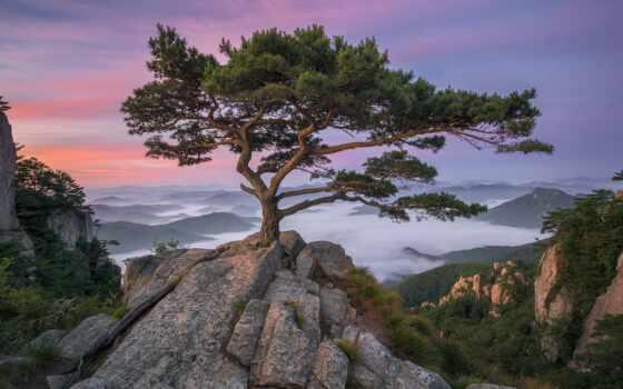 дерево, rock, nathaniel, небо, фотограф, пасмурный, фон, hour, фото, landscape, hill