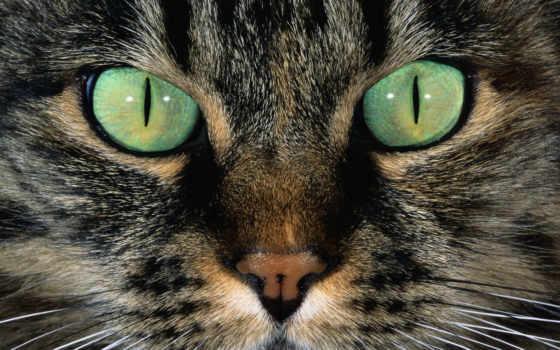 морда, глаза