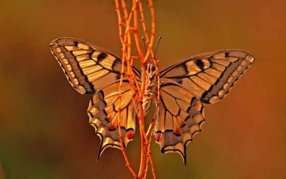 подборка, красивые, share, бабочки, насекомые,