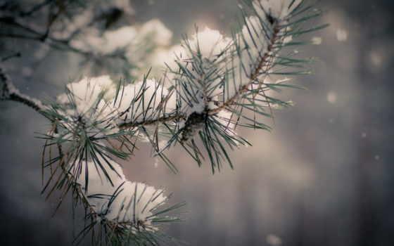 дерево, снег, winter