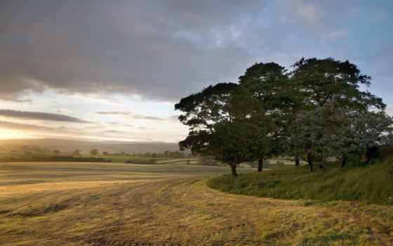 distance, поле, trees, природы, пейзажи -, высокого,