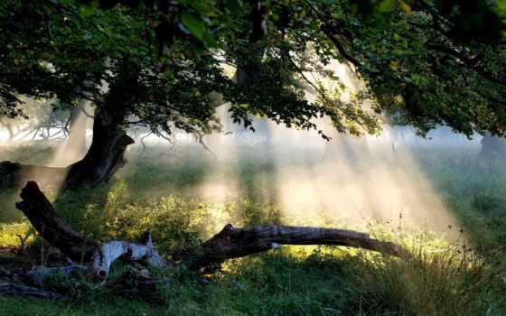 mystical, лес, free, images, top, wallpapersafari,