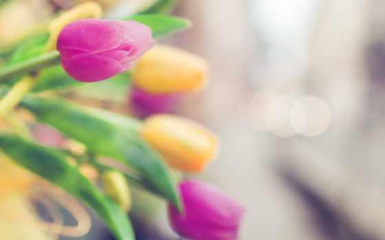 tulips, розовый, yellow, тюльпаны, cvety, розовые, thank, за,