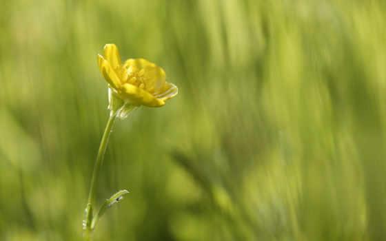 small, цветочек, цветы, цветами, amber, cvety, девушка, wasp,