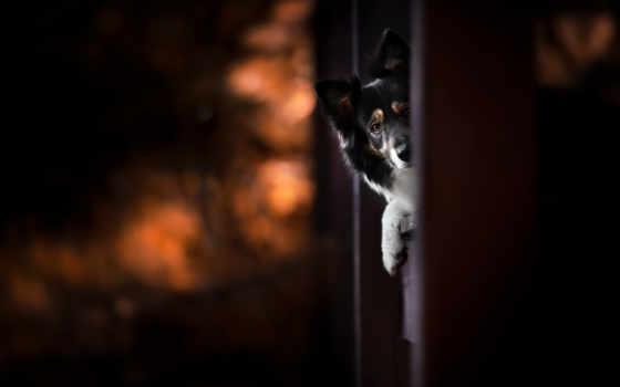 canin, photographe, audrey, darkness, мастерская, bellot, chien, собака, ай, stage, photographie