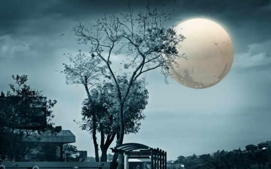 луна, full, art, город, птица, космос, vidmulia, сила, wide