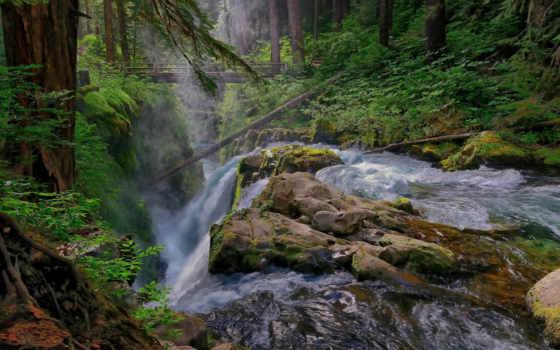 лес, река, поток