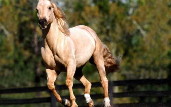 лошади, халк, бесплатные