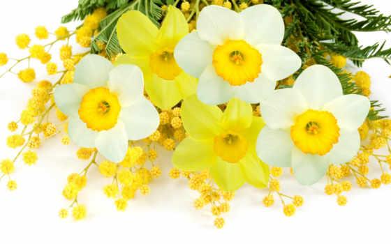 цветы, мимоза, мимозы
