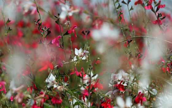 цветы, flowers, wild