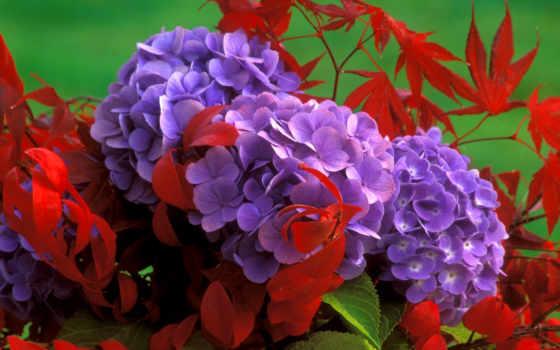 цветы, сиреневые, болоте